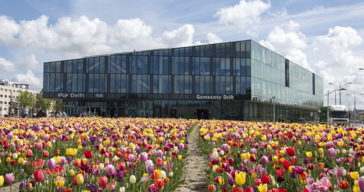 Tulpen langs de stationskade